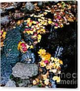 Fern Spring Yosemite Canvas Print