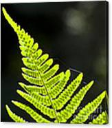 Fern Tip Canvas Print