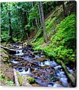 Ferns Dancing By The Creek Canvas Print