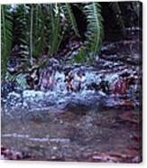 Ferns Dancing Canvas Print