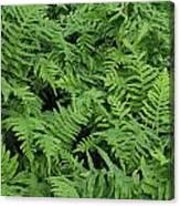 D3b6327-ferns In Sonoma Canvas Print