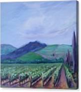 Ferrari Carano Vineyard Canvas Print