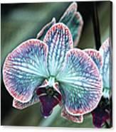 Festive Orchid Canvas Print