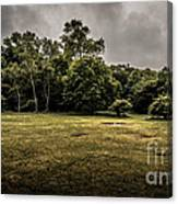 Field And Tress Canvas Print