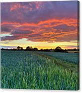 Field At Sunset Canvas Print