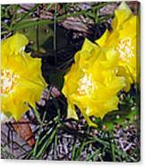Field Cactus Canvas Print