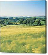 Field Near Barnstaple, North Devon Canvas Print
