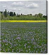 Field Of Camas And Western Buttercup Canvas Print