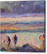Field Of Crane Canvas Print