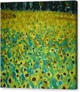 Field Of Daisy's Canvas Print
