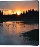 Field Of Ducks Canvas Print