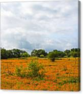 Field Ablaze Canvas Print
