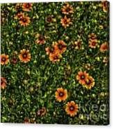 Field Of Flowers Canvas Print