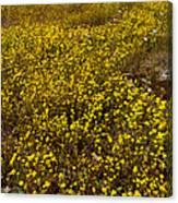 Field Of Goldfields In Park Sierra-ca Canvas Print