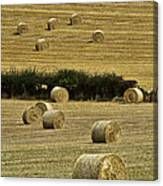 Field Of Hay Bales Canvas Print