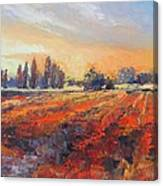 Field Of Light Oil Painting Canvas Print