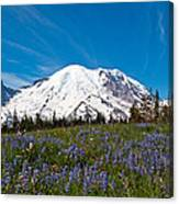 Field Of Lupines And Rainier Canvas Print