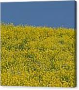 Field Of Mustard Canvas Print