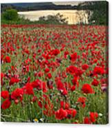 Field Of Poppies At The Lake Canvas Print