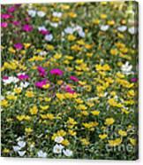 Field Of Pretty Flowers Canvas Print