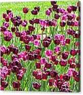 Field Of Purple Tulips 1 Canvas Print
