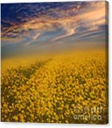 Field Of Rapeseed  Canvas Print