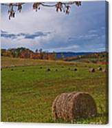 Field Of Round Bales Canvas Print