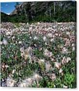 Field Of Seeding Flowers Canvas Print