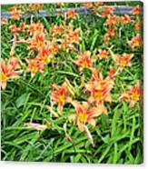 Field Of Tiger Lilies Canvas Print