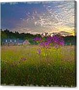 Field Of View Sunset Canvas Print