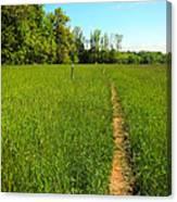 Field Path Canvas Print