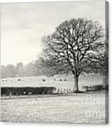 Field Scenery Canvas Print