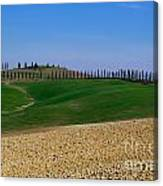 Field With Cypress Trees Canvas Print