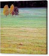 Field With Four Trees Canvas Print