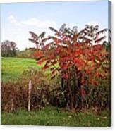 Field With Sumac In Autumn Canvas Print