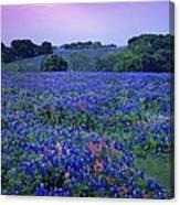 Fields Of Blue Canvas Print
