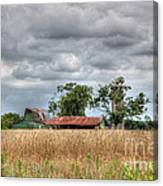 Fields Of Golden Grain Canvas Print