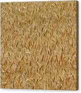 Fields Of Grain Canvas Print