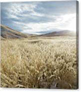 Fields Of Grass In Nevada Desert Canvas Print