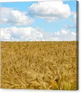 Fields Of Wheat Canvas Print
