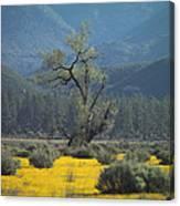 Fields Of Yellow Foxglove Canvas Print