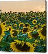 Fields Of Yellow  Canvas Print