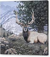 Fields Peak Elk Canvas Print