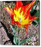 Fiery Beauty Canvas Print