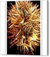 Fiery Floral Canvas Print