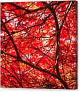 Fiery Maple Veins Canvas Print