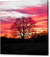 Fiery Oak 2 Canvas Print