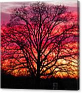 Fiery Oak Canvas Print
