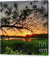 Fiery Swamp Sunset Canvas Print