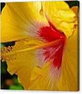 'fifth Dimension' Hibiscus Canvas Print